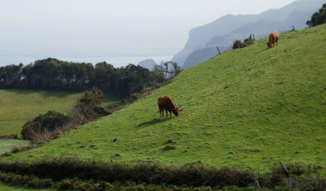 Norte – Santa Maria – Açores